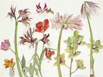 dame_elizabeth_violet_blackadder_rsa_rsw_ra_amaryllis_orchids_and_tuli_d5645995h
