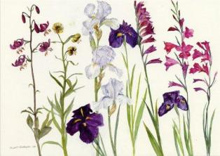 Irises-Lilies-and-Gladioli-Byzantium-by-Elizabeth-Blackadder